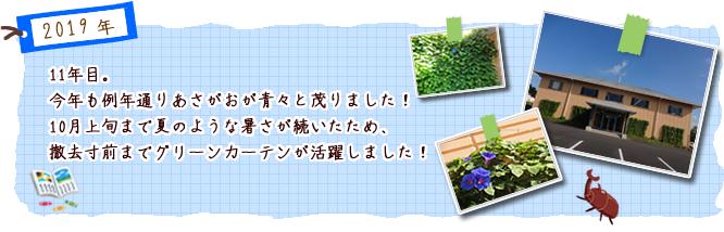 11年目。今年も例年通りあさがおが青々と茂りました!  10月上旬まで夏のような暑さが続いたため、撤去寸前までグリーンカーテンが活躍しました!